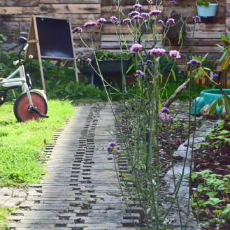 Gartner-Gitte har plantet violette Verbena langs den karakteristiske gangsti af lodretsatte gule mursten, som hun har fritlagt i Apothekerhaven i Christiansfeld.